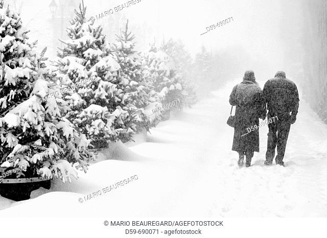 Couple walking in a winter snow storm, Montreal, Quebec, Canada