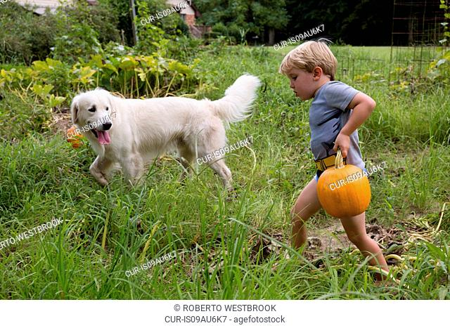 Boy with dog carrying heavy pumpkin on fruit farm