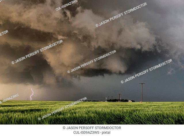 Forking lightning bolt from tornadic storm, turbulent updraft in the foreground over a green field of wheat