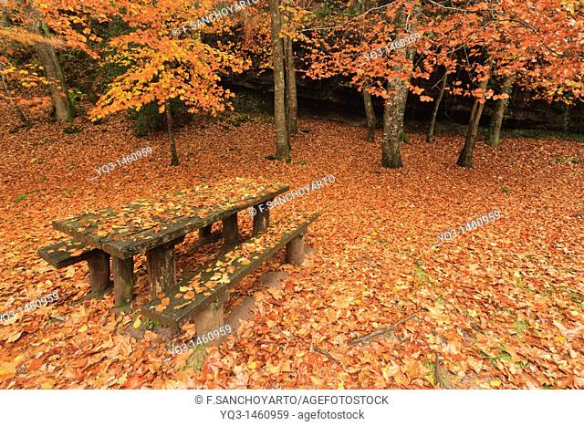 Fallen leaves cover wooden bench in autumn, Ucieda, Cantabria, Spain