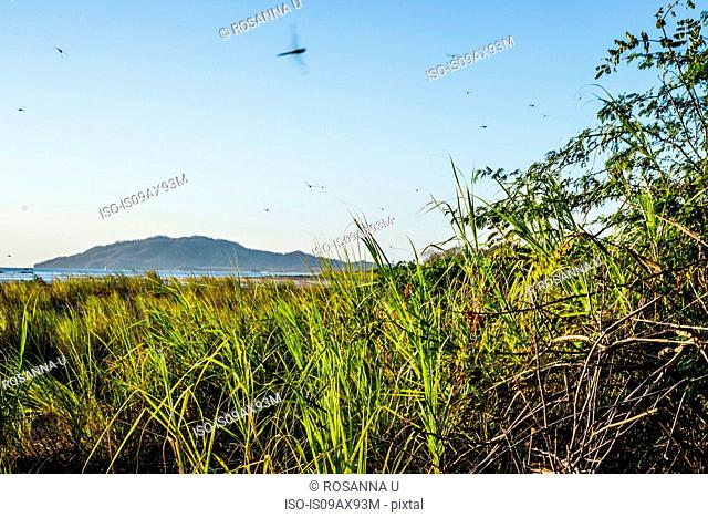 Insects hovering above coastal marsh, Tamarindo, Guanacaste, Costa Rica