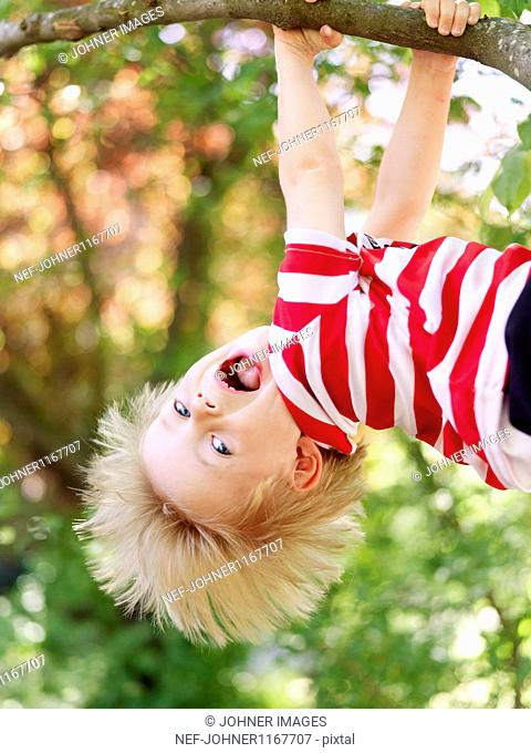 Boy hanging from branch of tree