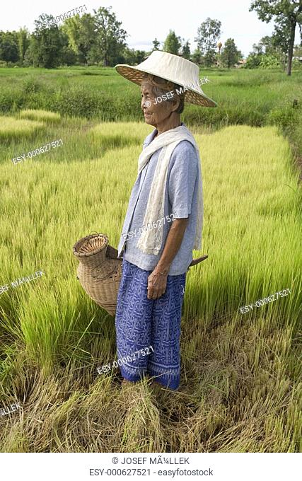 alte asiatische Frau am Reisfeld