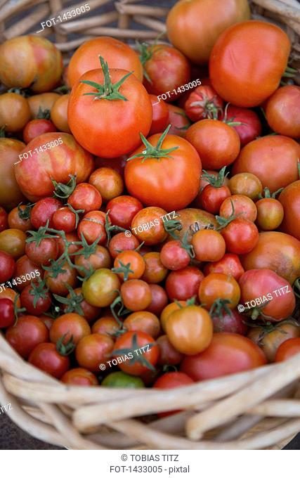 High angle view of fresh tomatoes in basket