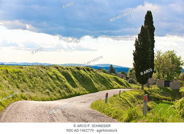 Country road, cypresses, Tuscany, Italy, Europe, Cupressus sempervirens