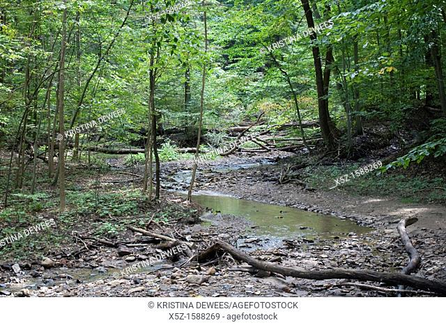 A stream during a drought in the woods
