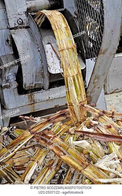 Ishigaki, Okinawa, Japan: squeezing sugarcane to get the juice to make chinsuko cookies at Bussan Center
