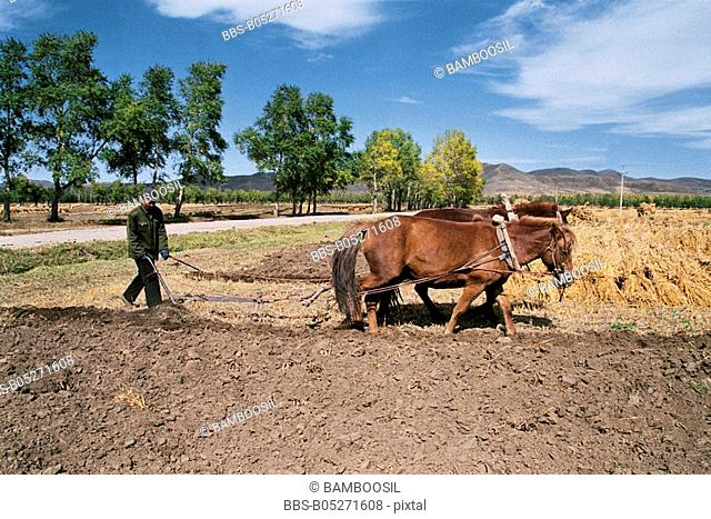 Man ploughing fields, Guyuan County, Hebei Province of People's Republic of China
