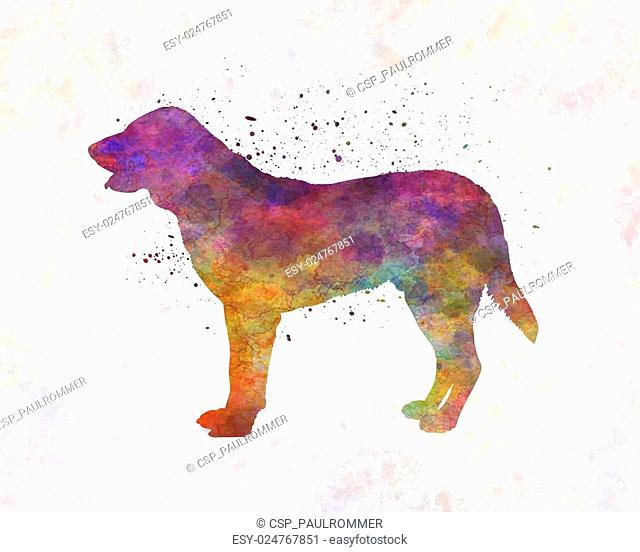 Castro Laboreiro Dog in watercolor
