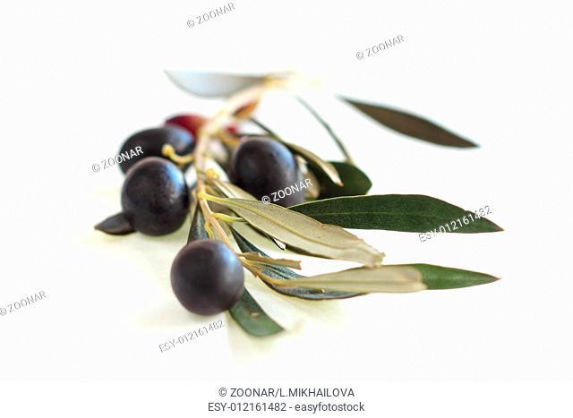 Black olives on branch