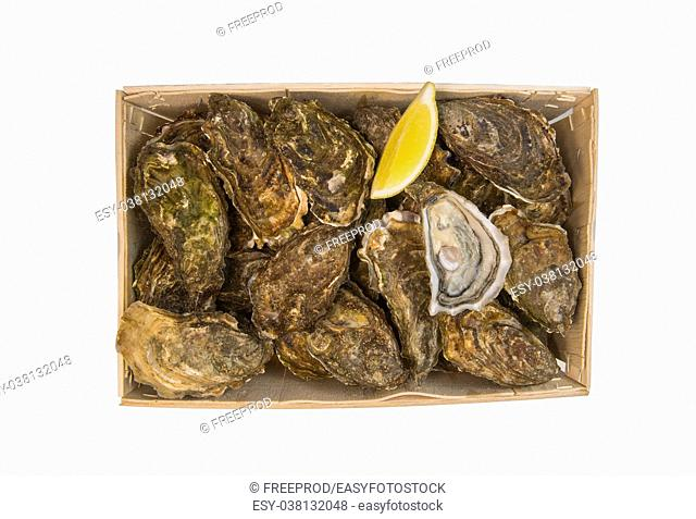 Raw oysters basket with lemon on white background, France