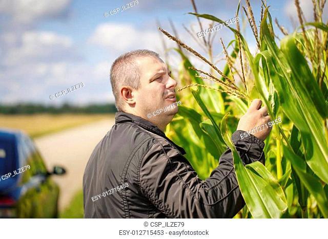 Farmer near the corn field