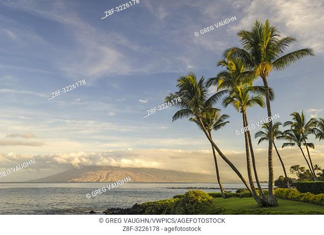 Coconut palm trees and west Maui mountains in early morning light from Wailea; Maui, Hawaii