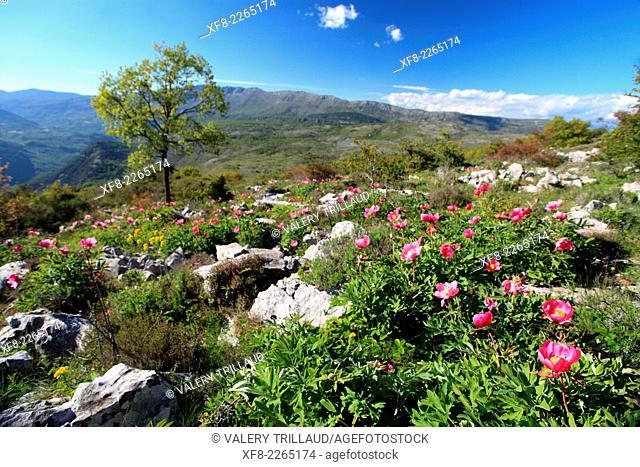 Mountainous landscape of the Loup valley, Prealpes d'Azur regional park, Alpes-Maritimes, Provence-Alpes-Côte d'Azur, France
