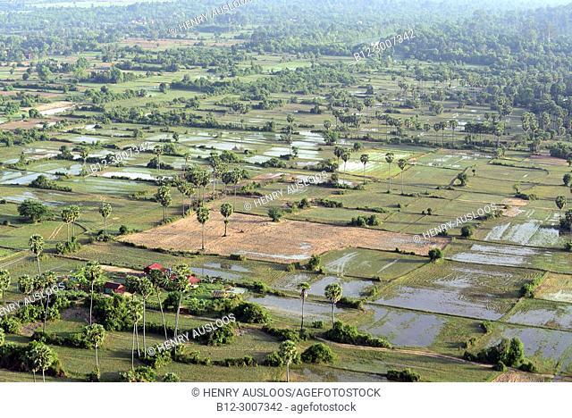 Cambodia, Siem Reap; around Angkor Vat, Rice-fields