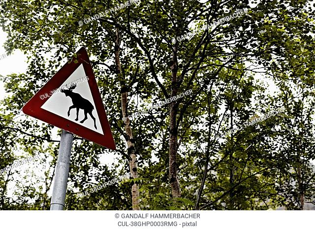 Warning sign depicting moose in forest