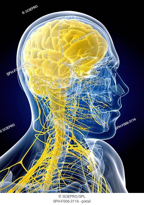Nervous system, computer artwork