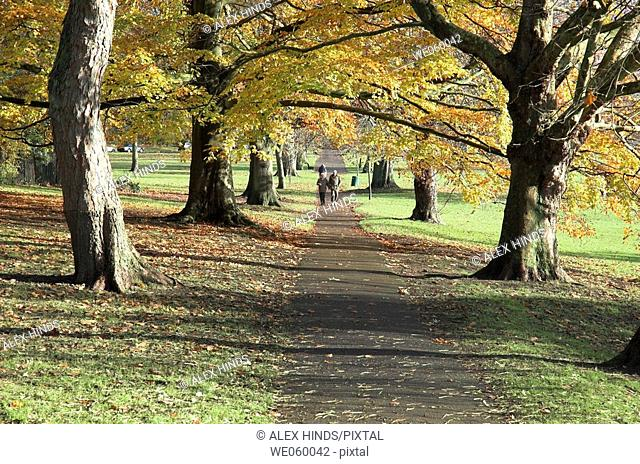 Path through a city park with trees changing colour during Autumn