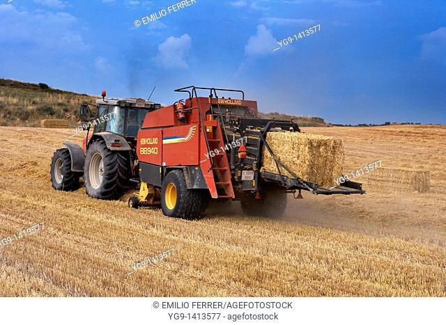 Tractor with machine, collecting straw on a field  LLeida  Spain