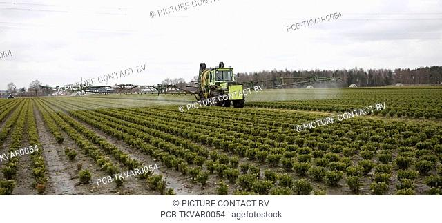 many farmers cultivate shrubs and outsource spraying of insecticide and fertilizers
