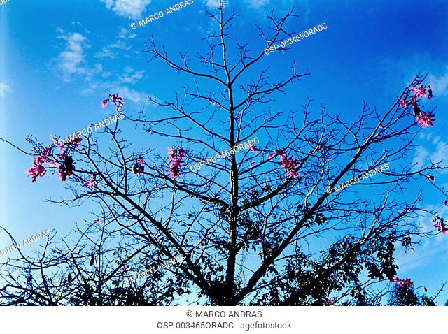 tree branches with some pink flowers and green leaves