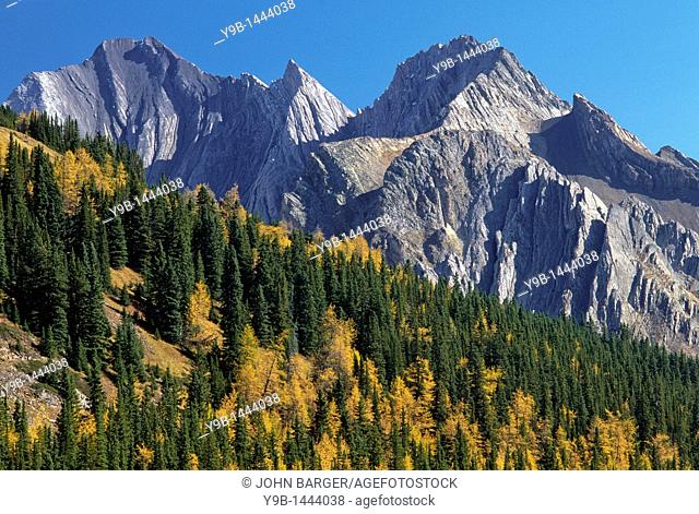 Tilted and eroded peaks near Elbow Pass rise above fall-colored larch, southern Rocky Mountains, Alberta, Canada