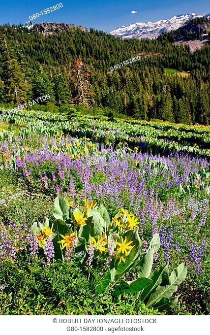 Summer bloom in the Lake Tahoe region