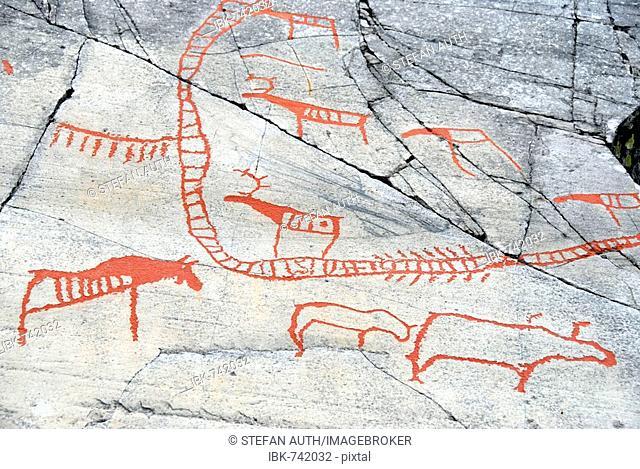 Elk and reindeer, rock painting, rock art at Alta, Norway, Scandinavia
