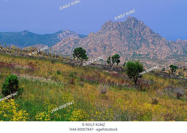 Desert des Agriates, Blumen, Berge, Sierra de Tenda, Santo-Pietro-de-Tenda, Korsika, Frankeich