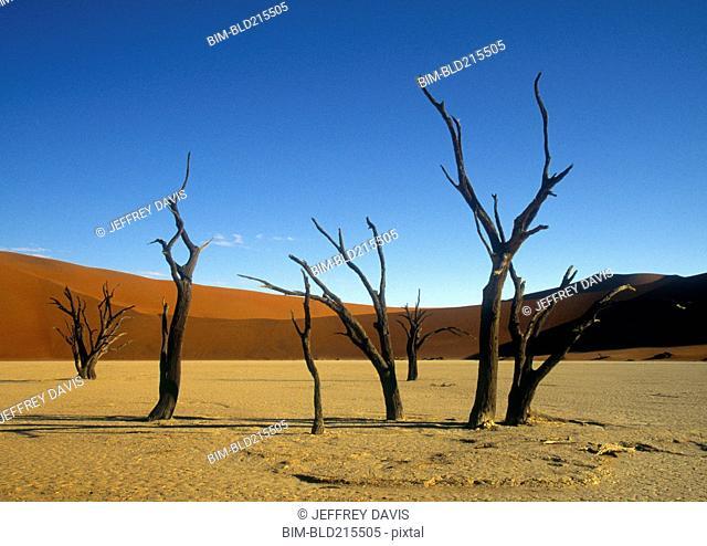 Bare trees in remote desert