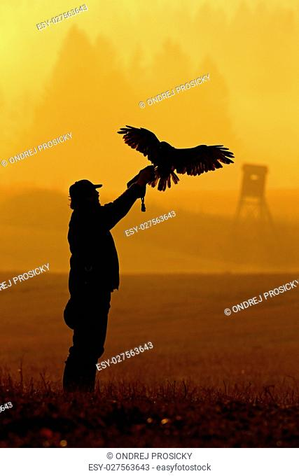 Silhouette of falconer with eagle. Hunter with bird