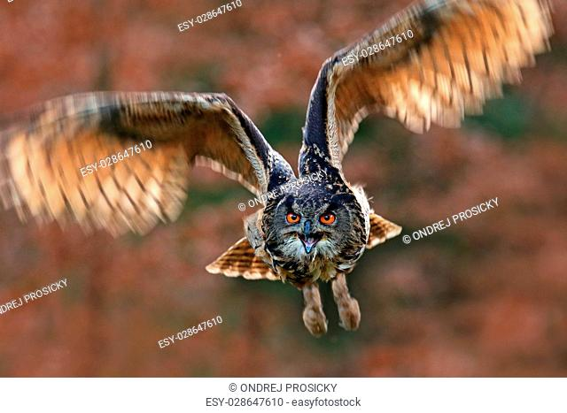 Flying bird with open wings in grass meadow, face to face detail