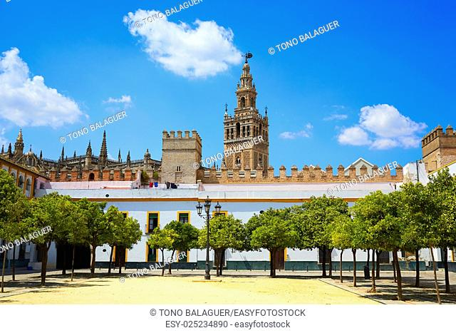 Seville cathedral Giralda tower from Alcazar of Sevilla Andalusia Spain