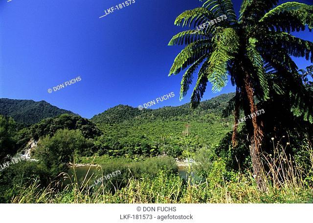 Vegetation at shore of Wanganui River in Whanganui National Park, North Island, New Zealand