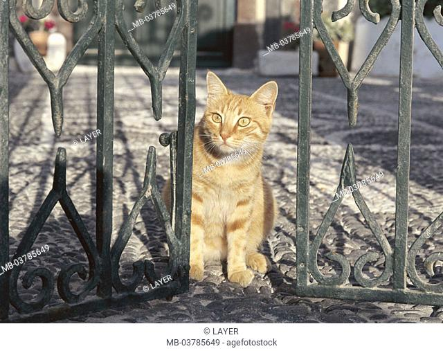 Garden gate, cat, red-striped, waiting   Gate, wrought-iron, animals, mammals, pet, house cat, sitting, observing, interesting, alertly, 'guards', entrance