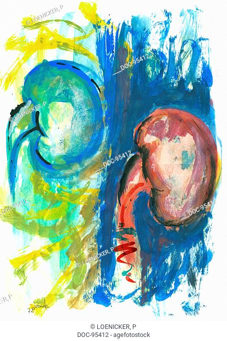 illustration - two kidneys in front of white background