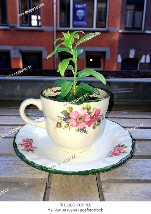Studio Tuinstraat, Tilburg, Netherlands. New and young plant, growing in a cup on a balcony