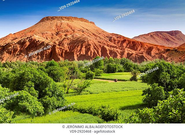 Agriculture. Dades Valley, Dades Gorges, High Atlas. Morocco, Maghreb North Africa