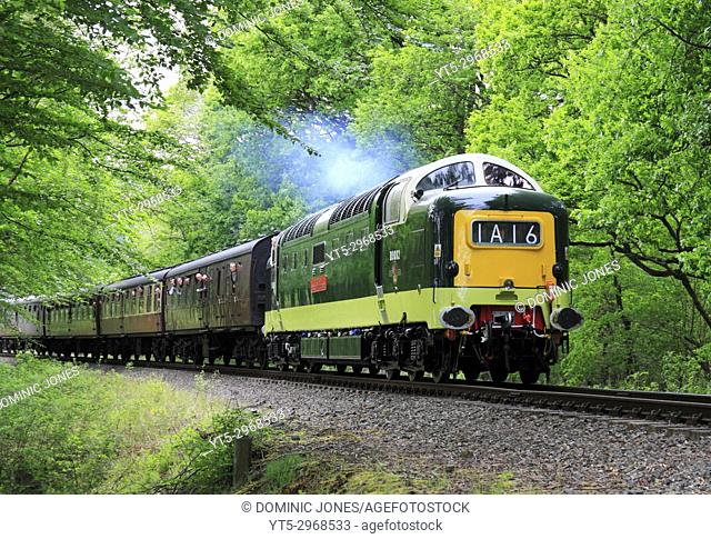 A BR Deltic D9002 pulls a passenger train through Trimpley on the Severn Valley Railway, Worcestershire, England, Europe