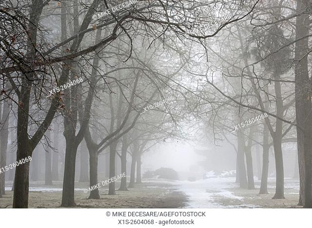 Fog casts eerie glow and shrouds trees and park bench