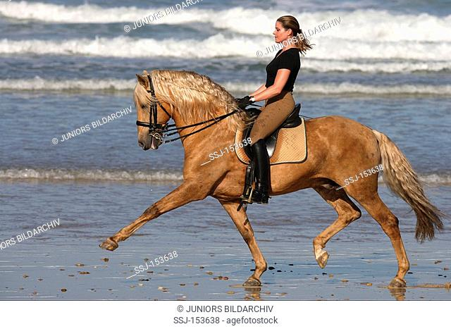 woman riding on Lusitano horse
