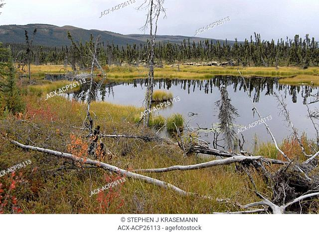 Scene of wetland and muskeg habitat with Pelly Mountain range in the distance. Black spruce trees, dwarf birch red, Labrador Tea all grow in lower wet...