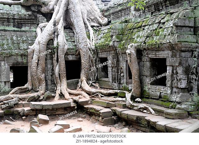 huge kapok-tree at ruins of Angkor Ta Prohm