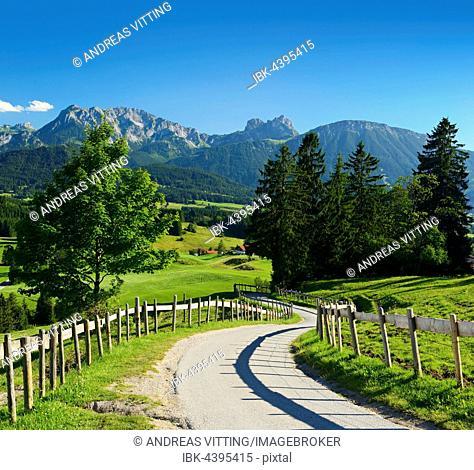 Narrow road through hilly landscape, Allgäu Alps, near Füssen, Allgäu, Bavaria, Germany