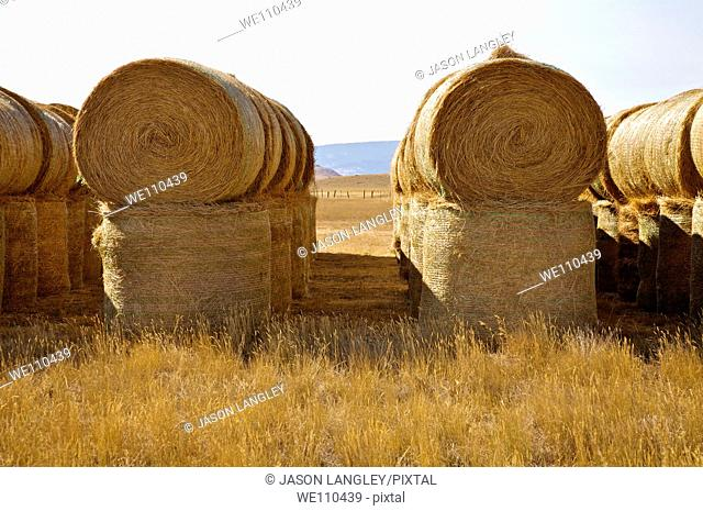Stacked Hay Bales drying on a sunny afternoon, Montana, United States