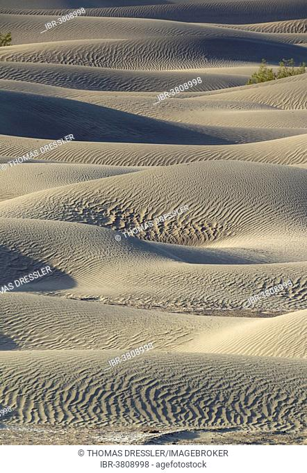 Mesquite Flat Sand Dunes, Death Valley, Death Valley National Park, California, USA