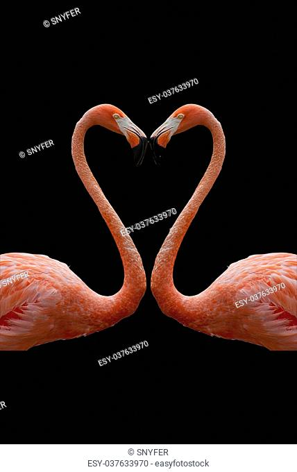heart composed by two flamingos