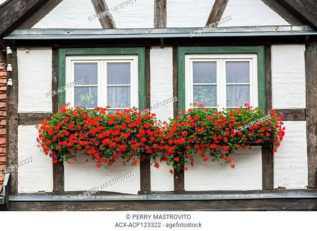 Half-timbered house facade with white and green trimmed windows, red Pelargonium - Geranium flowers in late summer, Warnemunde seaside resort in the district of...