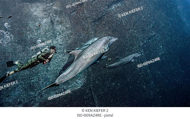 Scuba diver swimming with bottlenose dolphins