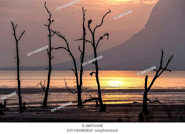 Sunset on a mangrove tree area at low tide, Bako national park, Malaysia, Borneo